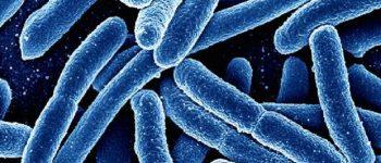 کشف راهی جهت نابودی باکتری ها بدون استفاده از آنتی بیوتیک